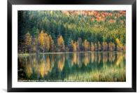 Autumn reflection, Framed Mounted Print