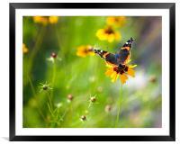 Springtime Renewal , Framed Mounted Print