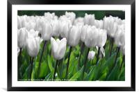 Even white flowers are beautiful, Framed Mounted Print