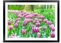 Tulips at Keukenhof, Framed Mounted Print