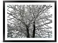 Snow on tree branches , Framed Mounted Print