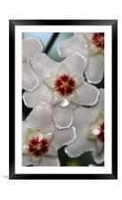 Flower Nectar , Framed Mounted Print
