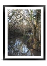 Stream through Trees #2, Framed Mounted Print