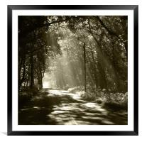 Sepia - Sunlight through the trees, Framed Mounted Print