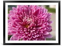 Beautiful Flower..... , Framed Mounted Print