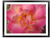 Pink flower , Framed Mounted Print