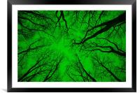 "Root or Branch – ""Green Positive Image"" , Framed Mounted Print"