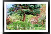 Tulips In An Aggasiz Garden , Framed Mounted Print