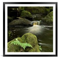 Ferns and Falls, Framed Mounted Print