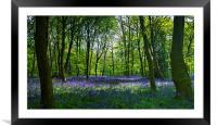 Chalet Wood Wanstead Park Bluebells, Framed Mounted Print
