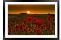 Sunset over poppies in Sussex, Framed Mounted Print