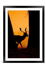 Deer Silouette, Framed Mounted Print