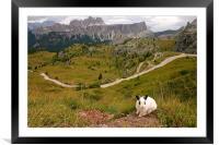 Rabbit on the edge , Framed Mounted Print
