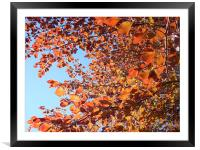 Leaves , Framed Mounted Print