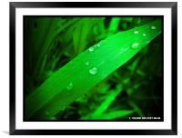 PURE DROPS , Framed Mounted Print