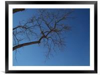 Barren tree , Framed Mounted Print