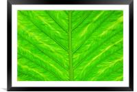 Leaf, Framed Mounted Print
