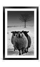 Wyrd Sisters,Farm animals, Framed Mounted Print