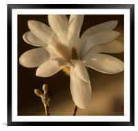 Magnolia 2, Framed Mounted Print