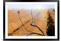 Israel, Negev, watering fields with sprinklers, Framed Mounted Print