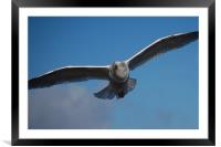 Whitby Seagull, Framed Mounted Print