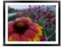 Flower with dew 1, Framed Mounted Print