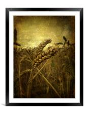 Wheat Field, Framed Mounted Print