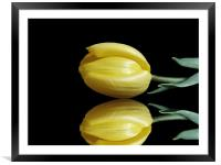 Mirrored Tulip, Framed Mounted Print