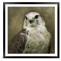 The Stare, Framed Mounted Print