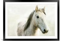 White Horse, Framed Mounted Print