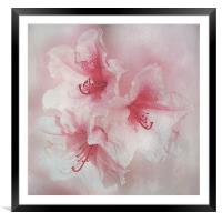 Floral Fragility, Framed Mounted Print