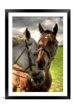 companionship, Framed Mounted Print