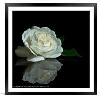 White Rose Reflected, Framed Mounted Print