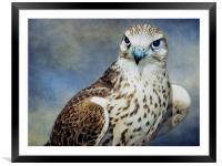 Saker Falcon, Framed Mounted Print