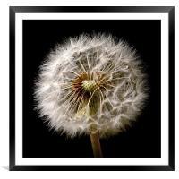 Dandelion Dreams, Framed Mounted Print