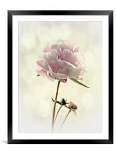 Perfect Peony, Framed Mounted Print