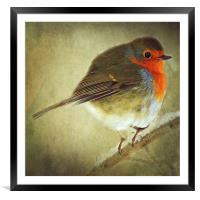 Robin, Framed Mounted Print