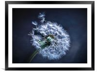 Dandelion Blues, Framed Mounted Print