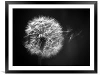Dandelion Whispers, Framed Mounted Print