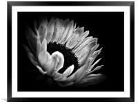 Sunflower Droplets In BW, Framed Mounted Print