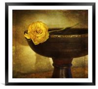A single rose, Framed Mounted Print