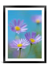 Blues & Purples, Framed Mounted Print