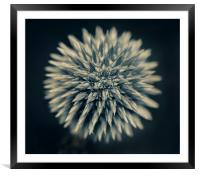 Young Alium, Framed Mounted Print