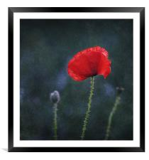 Poppy on a Dark Backround, Framed Mounted Print