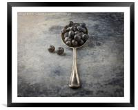 Blueberries, Framed Mounted Print