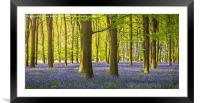 Woodland Bluebells, Framed Mounted Print
