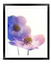 Sunlit Flowers, Framed Mounted Print