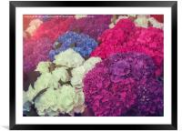 Hydrangea Mix, Framed Mounted Print