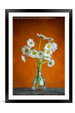 Oxeye Daisies, Framed Mounted Print