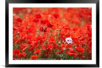 A Mass of Poppies, Framed Mounted Print